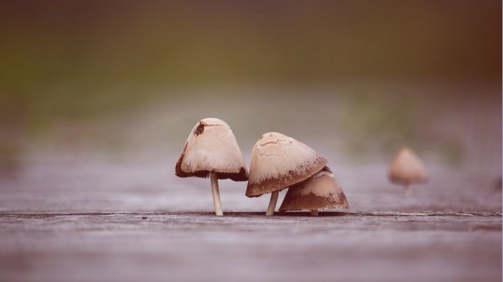 mushrooms are good for boosting immune system